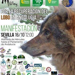 manifestacion recuperacion lobo andalucia
