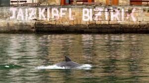 delfinak-pasaian11